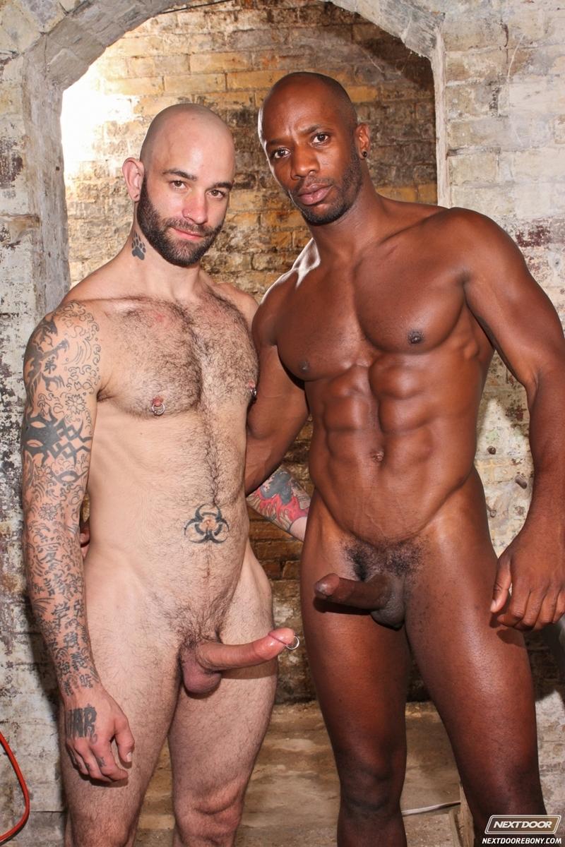 Gay pigs xxx